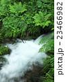 池山水源 湧水 水源の写真 23466982