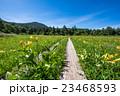 尾瀬 大江湿原 風景の写真 23468593