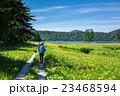 尾瀬 大江湿原 風景の写真 23468594