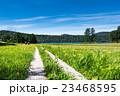 尾瀬 大江湿原 風景の写真 23468595