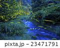 ホタル ゲンジボタル ヘイケボタルの写真 23471791