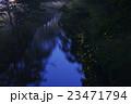 ホタル 川 ゲンジボタルの写真 23471794