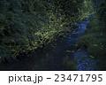 ホタル ゲンジボタル ヘイケボタルの写真 23471795