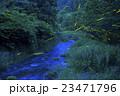 ホタル ゲンジボタル ヘイケボタルの写真 23471796