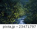 ホタル ゲンジボタル ヘイケボタルの写真 23471797
