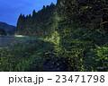 ホタル ゲンジボタル ヘイケボタルの写真 23471798