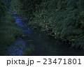 ホタル ゲンジボタル ヘイケボタルの写真 23471801