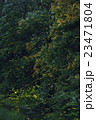 ホタル ゲンジボタル ヘイケボタルの写真 23471804