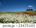 美瑛 花畑 北海道の写真 23475102
