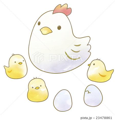 ニワトリとひよこと卵のイラスト素材 23478861 Pixta