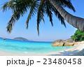 ヤシのビーチ 23480458