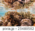 サンゴ1 23480502