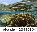 サンゴ2 23480504
