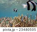 熱帯魚 23480505