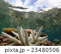サンゴの白化 23480506