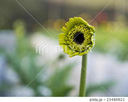 Green little flower 23480621