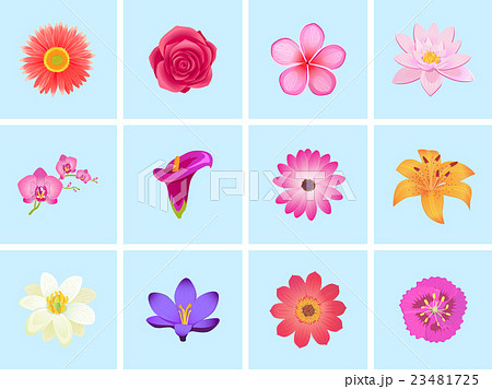 Flower color set design flat isolated 23481725 pixta flower color set design flat isolated voltagebd Image collections