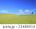 麦畑 大麦畑 富良野の写真 23484014