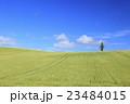 麦畑 大麦畑 富良野の写真 23484015