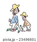 親子 芋 芋掘りのイラスト 23496601
