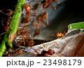 あり アリ 蟻の写真 23498179