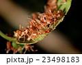 あり アリ 蟻の写真 23498183