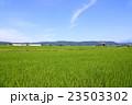 水田 23503302
