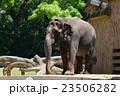 天王寺動物園 動物園 動物の写真 23506282