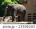 天王寺動物園 動物園 動物の写真 23506283