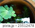 金魚鉢と水草 23512478