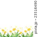水彩イラスト たんぽぽ 23516490