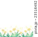 たんぽぽ 水彩 花のイラスト 23516492