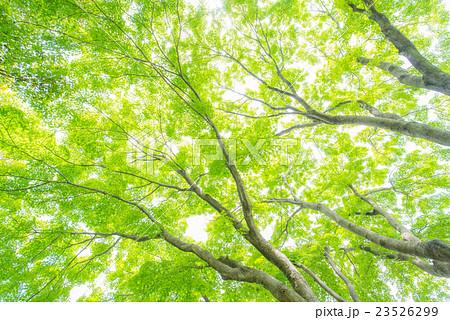 Green 23526299