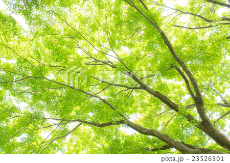 Green 23526301