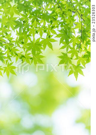 Green 23526303
