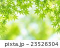 楓 新緑 春の写真 23526304