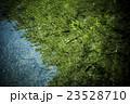 渓流の魚(ニジマス) 23528710