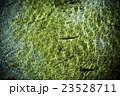 渓流の魚(イワナ) 23528711