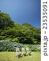 夏空と紫陽花 23535091