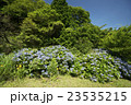 夏空と紫陽花 23535215