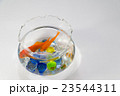 金魚鉢の金魚 23544311