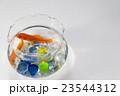 金魚鉢の金魚 23544312