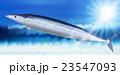 さんま 秋刀魚 秋の味覚のイラスト 23547093