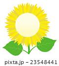 ひまわりの花 フレーム 23548441