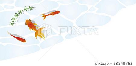 水面を泳ぐ金魚角枠3 23549762