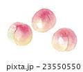 桃 モモ 23550550
