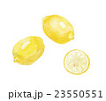レモン 檸檬 柑橘類のイラスト 23550551