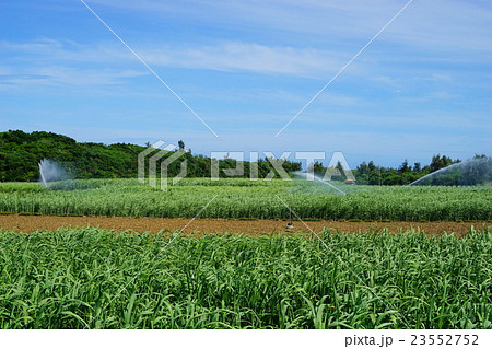 6月 沖縄・宮古島08サトウキビ畑 23552752