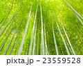 竹林(板橋区 竹の子公園) 23559528