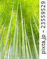 竹林(板橋区 竹の子公園) 23559529